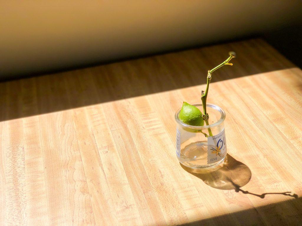 机の上で日差しを浴びている水耕栽培のレモン